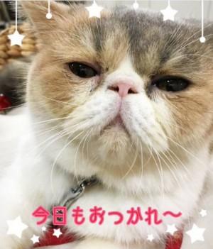 画像:オトナ女子公式ツイッターアカウント