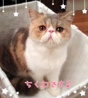 ちくわちゃん(アリスちゃん)の画像