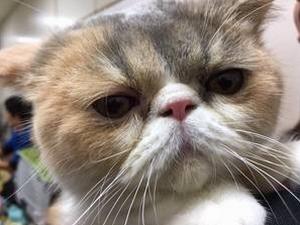 オトナ女子公式LINEアカウントから送られきた「ちくわちゃん」アップ画像