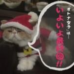 オトナ女子10話最終回予告ちくわちゃん(アリスちゃん)サンタクロース画像