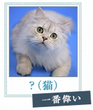 ドラマ掟上今日子の備忘録の猫ちゃん