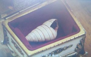 レギオン会長・ボスの李堅強(リジィエンチャン・竜雷太)が見つめる貝殻の入ったオルゴール