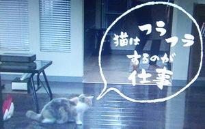 オトナ女子10話最終回、猫はふらふらするのが仕事なんだにゃ~