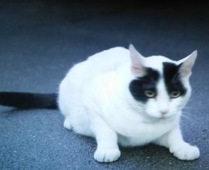 佃利菜(りな)の彼氏の猫まさひこ君の画像3