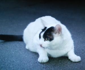 佃利菜(りな)の彼氏の猫まさひこ君の画像4