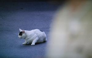佃利菜(りな)の彼氏の猫まさひこ君の画像1
