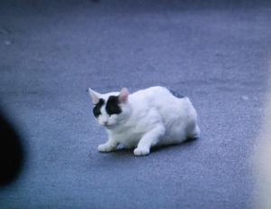 佃利菜(りな)の彼氏の猫まさひこ君の画像2
