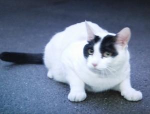 佃利菜(りな)の彼氏の猫まさひこ君の画像5