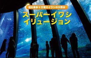 世界一難しい恋(セカムズ)第6話にて鮫島社長と柴山美咲がデートした水族館の見もの、巨大水槽でのイワシイリュージョン